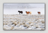 Horses and the Snow Storm - Bryce Canyon