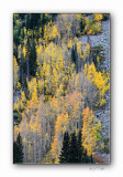 Colorado - Fall 08