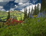 Alpine Wildflowers.jpg