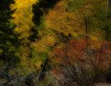 Autumn Dream.jpg