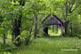 Perdu en forêt_IGP2231