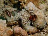 Octopus3.JPG