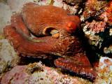Octopus11.JPG