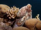 Octopus12.JPG