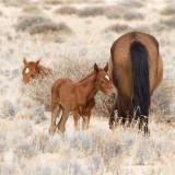 Namibian Wild Horses
