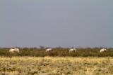 Namibian ghost elephants