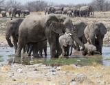 3 elephant families at waterhole