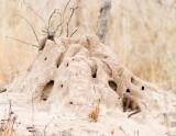 Dwarf mongoose on termite mound home