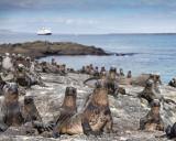 Galapagos--A Photo Tour 2010