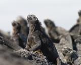 Galapagos1-14.jpg