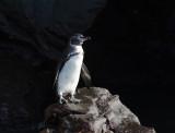 Galapagos1-19.jpg