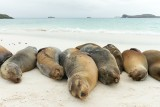 Galapagos1-23.jpg