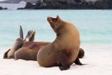 Galapagos1-24.jpg