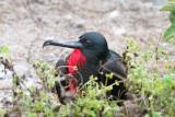 Galapagos1-37.jpg
