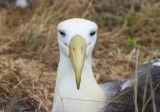 Galapagos1-41.jpg