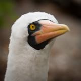 Galapagos1-43.jpg