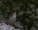 Galapagos1-51.jpg