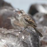 Galapagos1-52.jpg