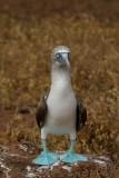 Galapagos1-56.jpg