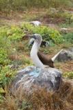Galapagos1-57.jpg
