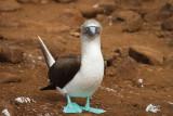 Galapagos1-58.jpg