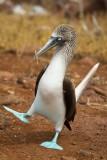Galapagos1-64.jpg
