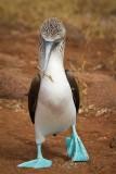 Galapagos1-65.jpg