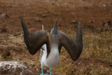Galapagos1-69.jpg