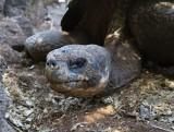 Galapagos1-78.jpg
