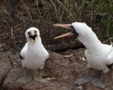 Galapagos1-79.jpg