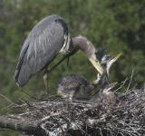 Nest 2 Family