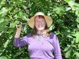 Kari vid fikonträd