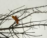 Fluttering In The Wind