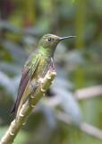 Hummingbirds / Colibríes