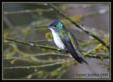 Andean-Emerald-3.jpg