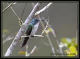 Andean-Emerald.jpg