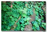 Rain Forest Fauna 8-30-9
