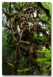 Treebeard 9-3-9