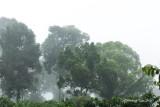 Tabin - Morning mist at Tabin Wildlife Reserve