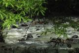 Tabin - Lipid River at Tabin Wildlife Reserve