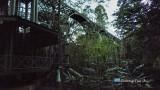 Sepilok - Rainforest Discovery Centre canopy walkway