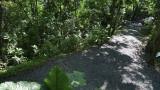 Sepilok - Rainforest Discovery Centre jungle trail