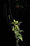 Light in the jungle