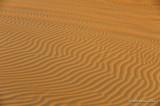 Desert Safari D700_16656 copy.jpg