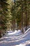 Toulumne Grove DSCb_03372 copy.jpg