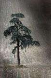 The ragged tree