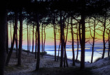 Pinewood view