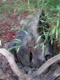 Chatsworth Smiley logs