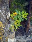 Spruce Canyon trail.jpg