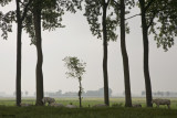Polderland - Riverland